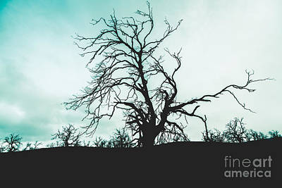 Haunted Wasteland Poster by Jorgo Photography - Wall Art Gallery