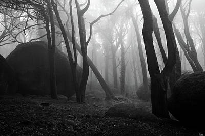 Poster featuring the photograph Haunted Woods by Jorge Maia