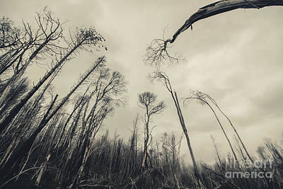 Haunting Wood Poster by Jorgo Photography - Wall Art Gallery