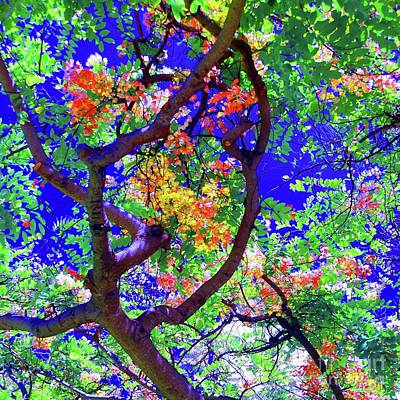 Poster featuring the photograph Hawaii Shower Tree Flowers In Abstract by D Davila