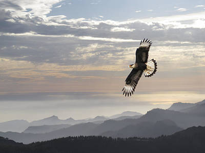 Hawk Mountains Poster by Daniel Hagerman