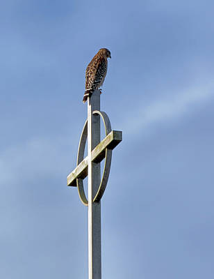 Hawk On Steeple Poster by Richard Rizzo