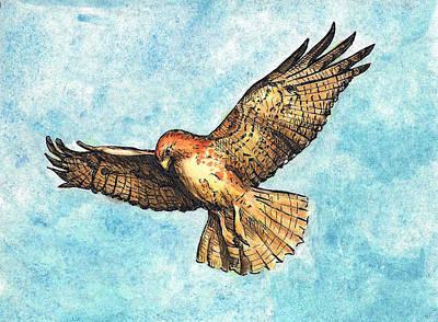 Hawk Poster by Thacia Langham