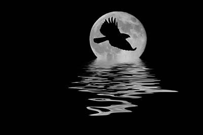 Hawk In The Moonlight Poster