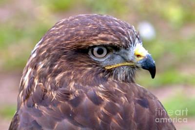 Hawks Eye View Poster by Stephen Melia
