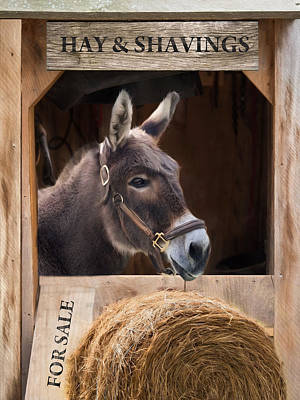 Poster featuring the photograph Hay And Shavings by Robin-Lee Vieira