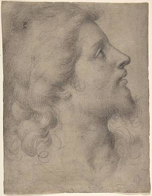 Head Of A Bearded Young Man Poster by Celestial Images