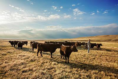 Head Of The Herd Poster by Todd Klassy
