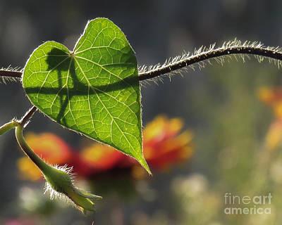 Heart Leaf 1 Poster