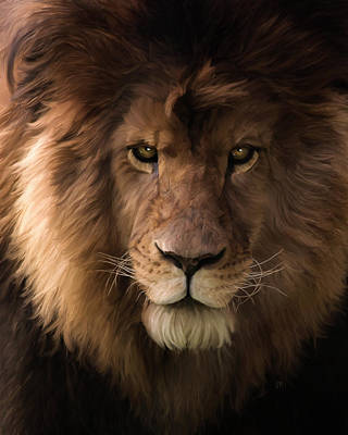Heart Of A Lion - Wildlife Art Poster