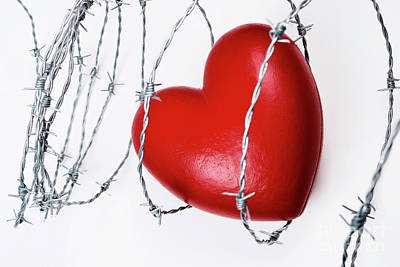 Heart Shape Surrounded With Barbed Wire Poster by Sami Sarkis
