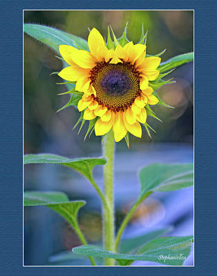 Heart Shaped Sunflower Poster by Stephanie Hayes