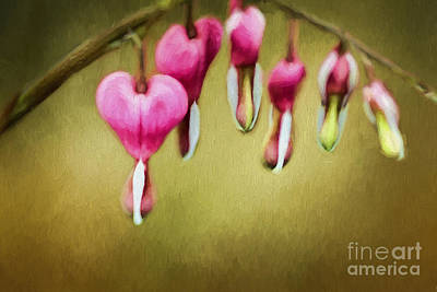 Hearts Of Spring Poster by Darren Fisher