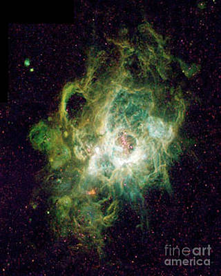 Heavenly Body  Triangulum Nebula Poster by Merton Allen
