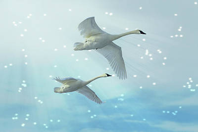 Heavenly Swan Flight Poster