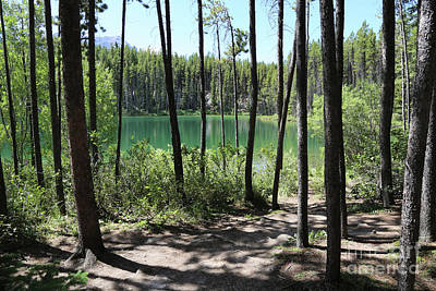 Hector Lake Through The Trees Poster