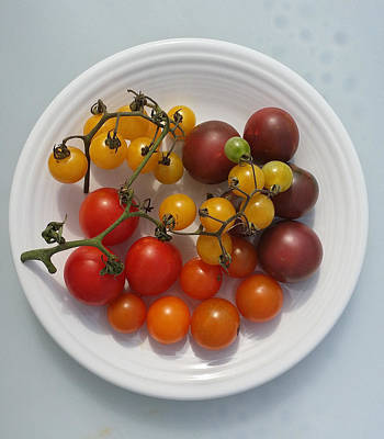 Heirloom Tomato Pure Poster by Mark Victors