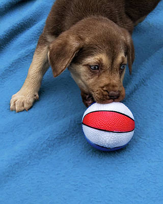 He'll Grow Into It - Puppy And Ball Poster