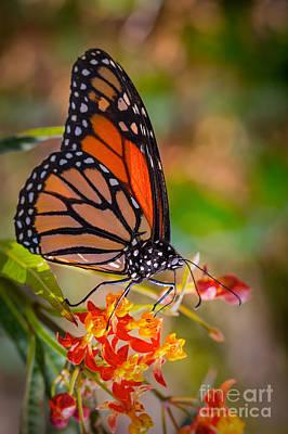 Hello Butterfly Poster by Ana V Ramirez