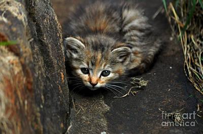 Hello Little Kitty Poster