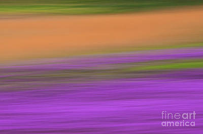 Poster featuring the photograph Henbit Abstract - D010049 by Daniel Dempster