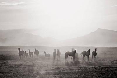 Herd #3 Poster by Artur Baboev