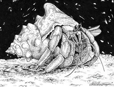 Hermit Crab Drawing Poster by Alexandra Franzese