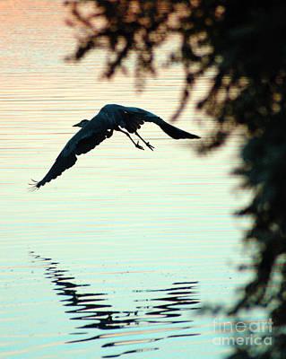 Heron At Dusk Poster