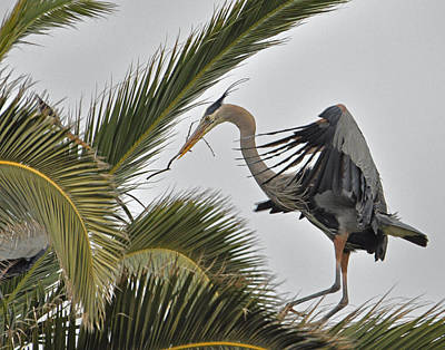 Heron In The Palm Poster