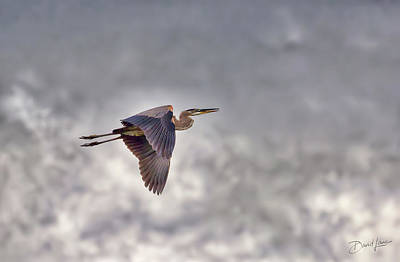Poster featuring the photograph Heron In The Storm by David A Lane