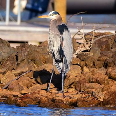 Poster featuring the photograph Heron On The Rocks by Lisa Wooten