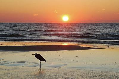 Heron Watching Sunrise Poster