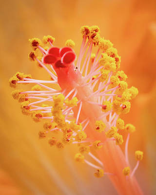 Poster featuring the photograph Hibiscus-1 by David Coblitz