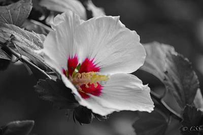 Hibiscus Bw Poster