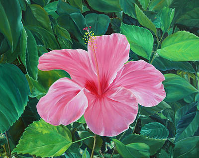 Poster featuring the painting Hibiscus by Elizabeth Lock