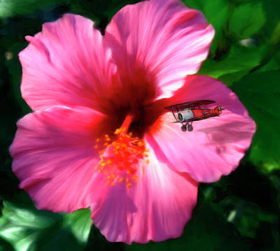 Hibiscus Fly-by Poster by Snake Jagger