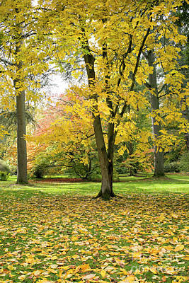 Hickory Autumn Poster