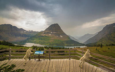Hidden Lake Overlook // Glacier National Park Poster