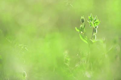 Hidden Treasure. Green World Poster by Jenny Rainbow