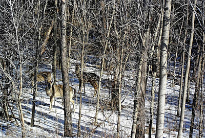 Hiding In The Forest Poster by Debbie Oppermann