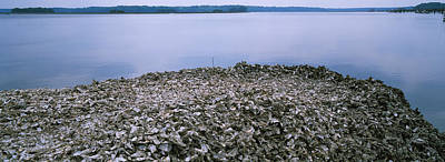 High Angle View Of Oyster Shells Poster
