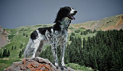 High Country, English Setter Poster by Flying Z Photography By Zayne Diamond