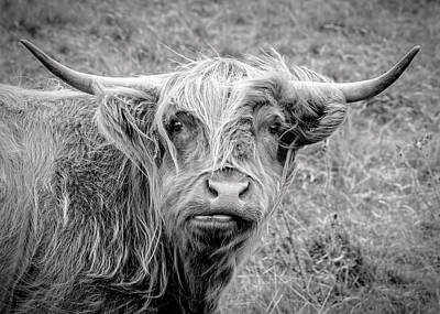 Highland Cow Poster by Jeremy Lavender Photography
