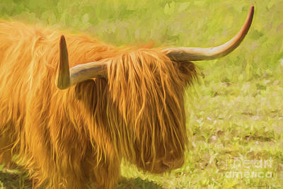Highland Cow Poster by Veikko Suikkanen