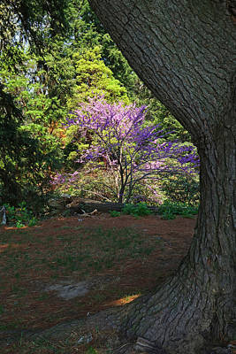 Highland Park In Rochester Ny Lilac Festival Poster