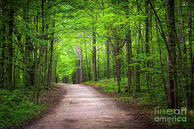 Hiking Trail In Green Forest Poster