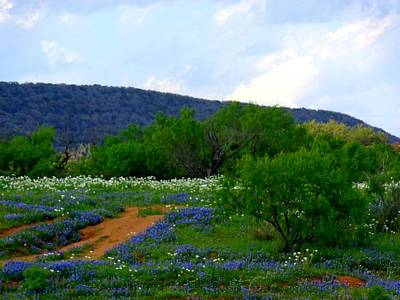 Hill Country Colors Of Spring Poster by Victoria Beasley