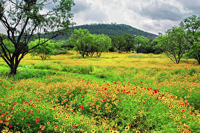 Hill Country Wildflowers Poster