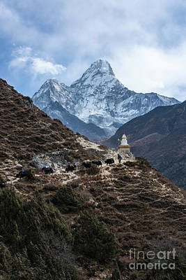 Poster featuring the photograph Himalayan Yak Train by Mike Reid