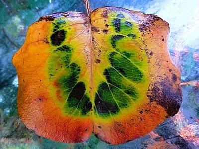 Hippie Leaf Poster